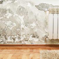 Identifier et se débarrasser de la moisissure blanche dans votre maison